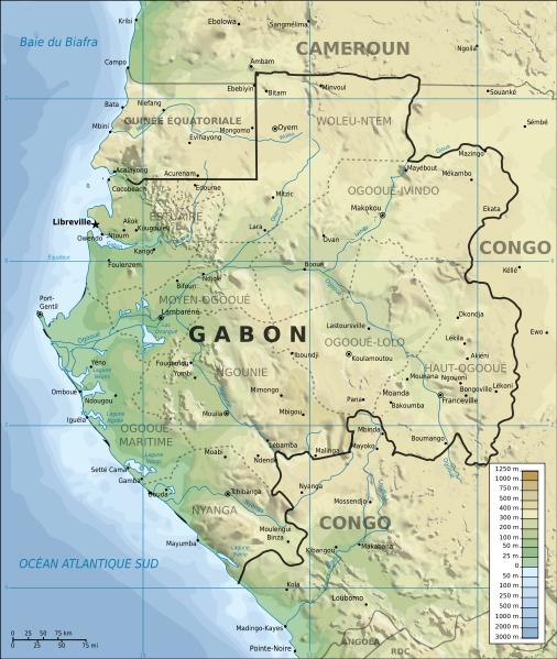 28 éléphants de forêt retrouvés morts au Gabon